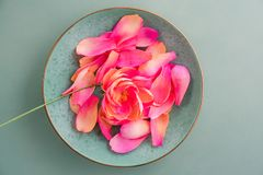 Flores de la peonía del papel de crespón Foto de archivo libre de regalías