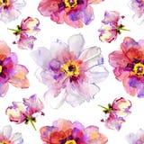 Flores de la peonía. Ejemplo de la acuarela. Imagen de archivo libre de regalías