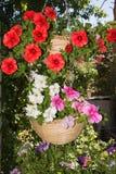 Flores de la petunia en áreas al aire libre de las cestas de la ejecución Imagenes de archivo
