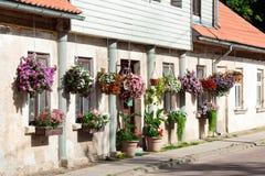 Flores de la petunia en potes Fotografía de archivo libre de regalías