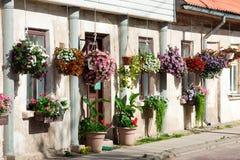 Flores de la petunia en potes Imagen de archivo libre de regalías
