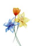 Flores de la pintura de la acuarela aisladas en el fondo blanco Imágenes de archivo libres de regalías