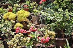 Flores de la planta Fotografía de archivo