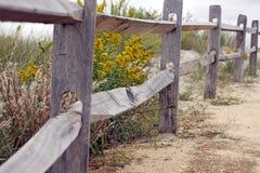 Flores de la playa Fotografía de archivo libre de regalías
