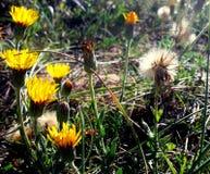 Flores de la playa Fotos de archivo