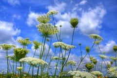 Flores de la pradera contra el cielo azul Fotografía de archivo libre de regalías