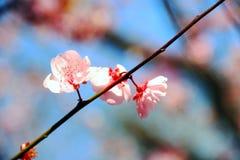 Flores de la primavera Fotos de archivo libres de regalías