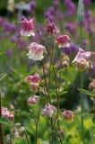 Flores de la primavera fotos de archivo