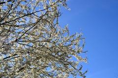 Flores de la primavera Imagenes de archivo