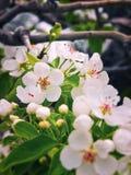 Flores de la primavera Foto de archivo libre de regalías