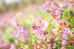 Flores de la primavera imágenes de archivo libres de regalías