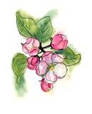 Flores de la primavera libre illustration