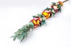 Flores de la primavera aisladas en el fondo blanco Imágenes de archivo libres de regalías