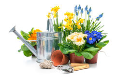 Flores de la primavera con las herramientas que cultivan un huerto Foto de archivo libre de regalías