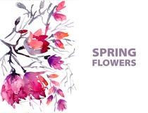 Flores de la primavera de la acuarela Fotos de archivo