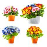 Flores de la primavera de la primavera Fotos de archivo