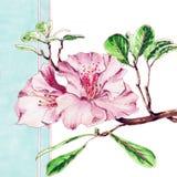 Flores de la primavera de Pascua en fondo azul Imágenes de archivo libres de regalías