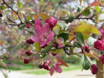 Flores de la primavera en árbol Fotos de archivo libres de regalías