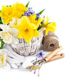 Flores de la primavera en cesta con los utensilios de jardinería Fotografía de archivo libre de regalías