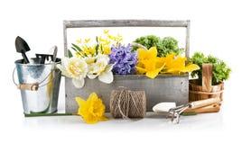 Flores de la primavera en cesta de madera con los utensilios de jardinería Imagenes de archivo
