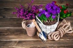 Flores de la primavera en cesta de mimbre con los utensilios de jardinería Fotografía de archivo libre de regalías
