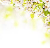 Flores de la primavera en el fondo blanco Fotos de archivo