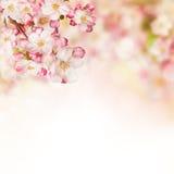 Flores de la primavera en el fondo blanco Fotografía de archivo