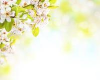 Flores de la primavera en el fondo blanco Foto de archivo libre de regalías