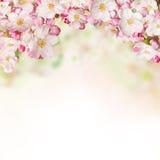 Flores de la primavera en el fondo blanco Foto de archivo