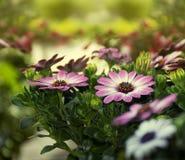 Flores de la primavera en el fondo de la salida del sol Imagenes de archivo