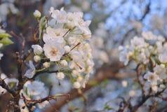 Flores de la primavera en la floración Imágenes de archivo libres de regalías