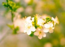 Flores de la primavera en fondo borroso Imagen de archivo libre de regalías