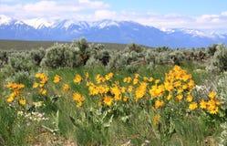 Flores de la primavera en las montañas de la fresa Fotos de archivo