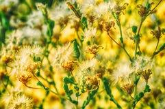 Flores de la primavera en naturaleza Imágenes de archivo libres de regalías