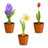 Flores de la primavera en potes Imágenes de archivo libres de regalías