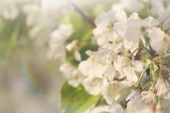 Flores de la primavera en sol imagenes de archivo