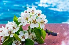 Flores de la primavera en un agua Imagen de archivo libre de regalías