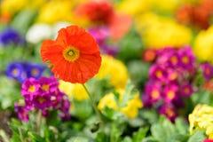 Flores de la primavera en un fondo reservado suavidad Foto de archivo