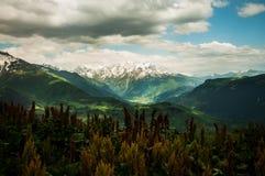 Flores de la primavera en un pico de montaña. Foto de archivo