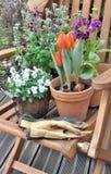 Flores de la primavera en una terraza Imagenes de archivo