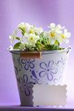 Flores de la primavera - foto de la acción del día de madres Foto de archivo libre de regalías