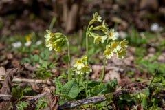 Flores de la primavera, primavera Imagenes de archivo