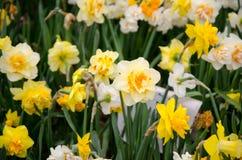 Flores de la primavera y cama de flor coloridas en los parques y los jardines a lo largo del Bosforus en Turquía fotografía de archivo