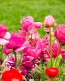 Flores de la primavera y cama de flor coloridas en los parques y los jardines a lo largo del Bosforus en Turquía imagenes de archivo