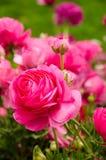 Flores de la primavera y cama de flor coloridas en los parques y los jardines a lo largo del Bosforus en Turquía foto de archivo