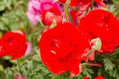 Flores de la primavera y cama de flor coloridas en los parques y los jardines a lo largo del Bosforus en Turquía imagen de archivo