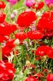 Flores de la primavera y cama de flor coloridas en los parques y los jardines a lo largo del Bosforus en Turquía fotografía de archivo libre de regalías