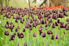 Flores de la primavera y cama de flor coloridas en los parques y los jardines a lo largo del Bosforus en Turquía imágenes de archivo libres de regalías