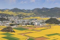 Flores de la rabina de Luoping en Yunnan China Imagen de archivo libre de regalías