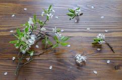 Flores de la rama de la cereza y de la cereza que mienten en superficie de madera Visión superior Foco selectivo Fotografía de archivo